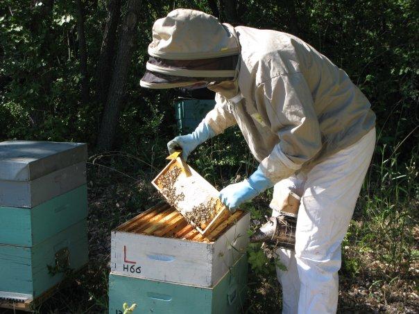 apiculteur autour de moi